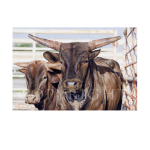 Big brother, western artist, Mikel Donahue