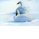 Winter's Grace, Buster, Mikel Donahue, western artist
